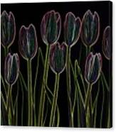 Velvet Tulips Canvas Print