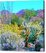 Verdant Spring Mohave Desert Canvas Print