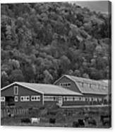 Vermont Farm With Cows Autumn Fall Black And White Canvas Print