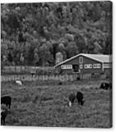 Vermont Farm With Cows Black And White Canvas Print