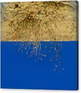 Vertigo II Canvas Print
