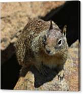 Very Cute Face Of A Wild Squirrel In California Canvas Print