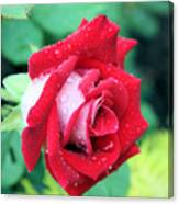 Very Dewy Rose Canvas Print