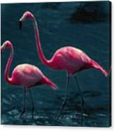 Very Pink Flamingos Canvas Print