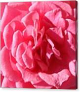 Very Pink Mini Canvas Print