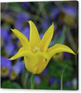 Very Pretty Yellow Tulip With Spikey Petals Canvas Print