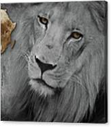 Very Sad Lion, Cry For Africa Canvas Print