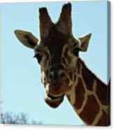 Very Tall Giraffe Canvas Print