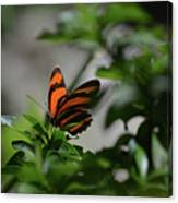 Vibrant Colors To A Orange Oak Tiger Butterfly Canvas Print