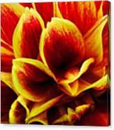 Vibrant Dahlia Petals Canvas Print