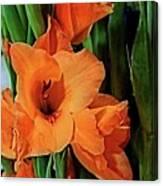 Vibrant Gladiolus Canvas Print