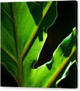 Vibrant Green Canvas Print