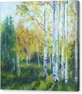 Vibrant Landscape Paintings - Arizona Aspens And Pine Trees - Virgilla Art Canvas Print