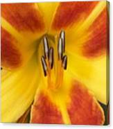 Vibrant Lilly Canvas Print