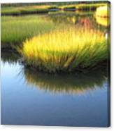 Vibrant Marsh Grasses Canvas Print