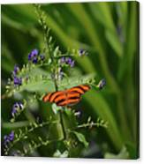 Vibrant Oak Tiger Butterfly Surrounded By Blue Flowers Canvas Print