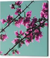 Vibrant Pink Flowers Bloom Floral Background Canvas Print