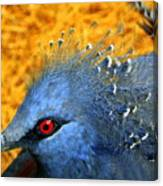 Victoria Crowned Pigeon Close Up Canvas Print