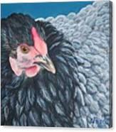 Victoria, Lavender Cochin Chicken Canvas Print