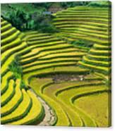 Vietnam Rice Terraces Canvas Print