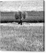 Vietnamese Farmer Black White  Canvas Print