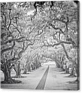 View Down Oak Alley Canvas Print