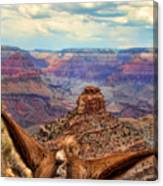 View From Behind The Ears Canvas Print