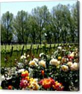 View From Bridlewood Vineyards Canvas Print