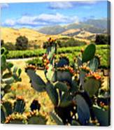 View From Santa Rosa Road Canvas Print