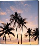 View Of Palms Canvas Print