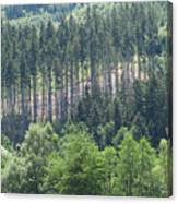 View Of The Mixed Forest Canvas Print
