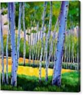 View Through Aspen Canvas Print