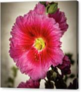 Vignetted Hollyhock Canvas Print