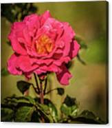 Vignetted  Rose Canvas Print