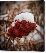 Vignettes - First Snow 1 Canvas Print