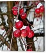 Vignettes - Snow Fruit Canvas Print