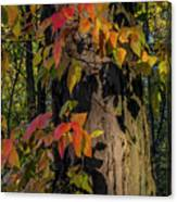 Vine And Hickory Canvas Print