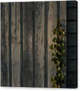 Vine On Wood Canvas Print