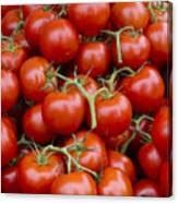 Vine Ripe Tomatos Canvas Print