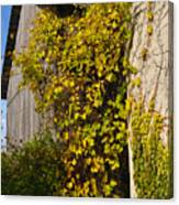 Vined Silo Canvas Print