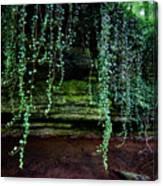 Vines Flow Over Creek Canvas Print