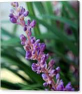 Vines Of Purple Canvas Print