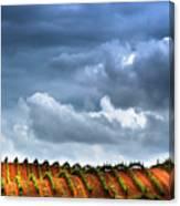 Vineyard 01 Canvas Print