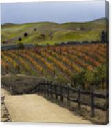 Vineyard 2 Canvas Print