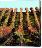 Vineyard 27 Canvas Print