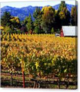 Vineyard 4 Canvas Print