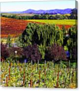 Vineyard 5 Canvas Print
