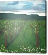 Vineyard Angel Canvas Print