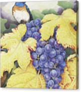 Vineyard Blue Canvas Print