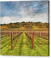 Vineyard Convergence Canvas Print